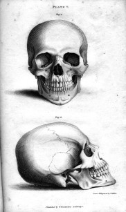 plate_vb_human_skull_engraving_by_william_miller_after_drawing_by_w_miller1
